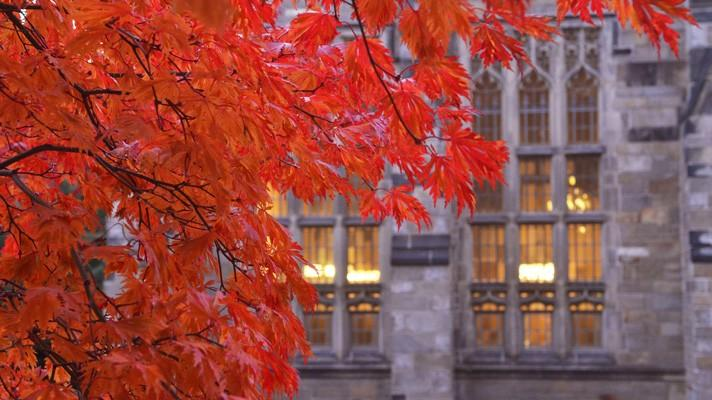 Autumn Color on Yale Campus 耶鲁秋色